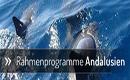 Rahmenprogramme